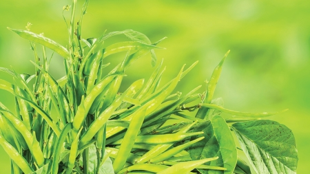 Solvay and Henkel team up on sustainable farming project
